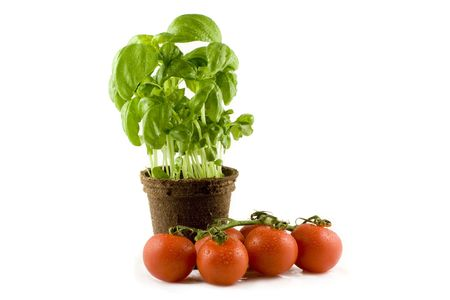 A fresh basil plant and some nice red tomatos isolated on white background Stock Photo