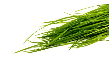 Green grass isolated onwhite background