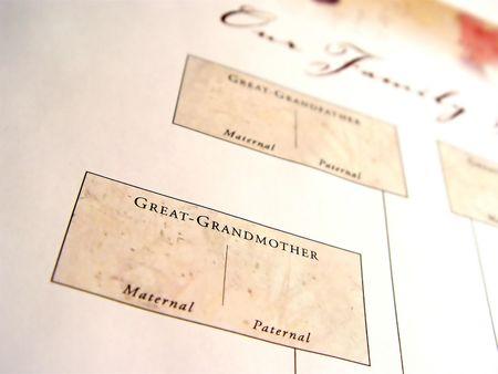 arbol geneal�gico: Closeup �rbol de la familia