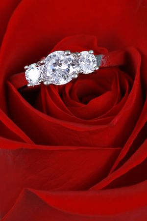 Silver Engagement ring in red rose - Closeup