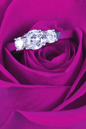 Engagement ring in pink rose taken closeup photo