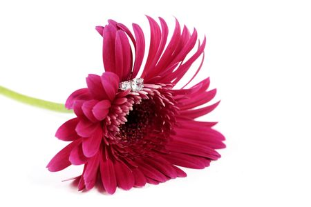 Pink Flower on white with Ring