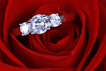 Wedding ring in red rose taken closeup photo