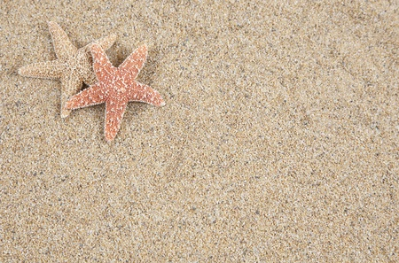gritty: Starfish in the sand - copy space Stock Photo
