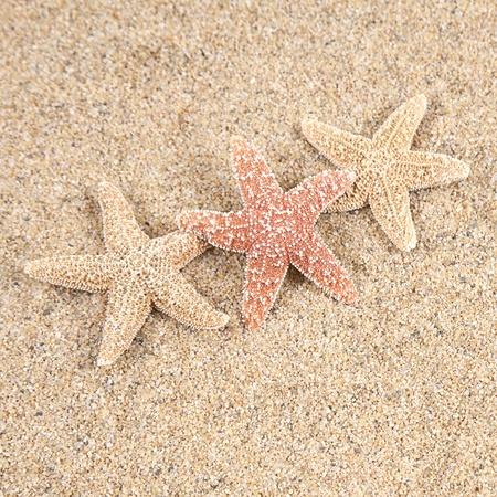 Starfish in het strand zand - ruimte kopiëren Stockfoto
