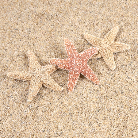 summer holiday: starfish in the beach sand - copy space Stock Photo