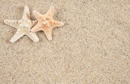 estrella de mar: estrella de mar en la playa de arena - copiar espacio