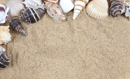 Nice sea shells on the sandy beach taken closeup, Shell border or frame photo