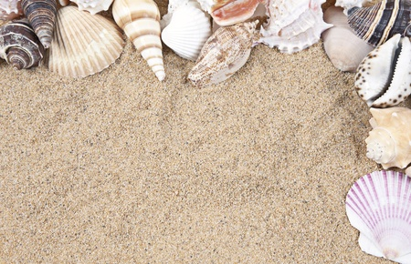 Nice sea shells on the sandy beach taken closeup, Shell border or frame Stock Photo - 8991196