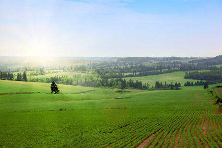 Sunny day on a farmers field Stock Photo - 8991170