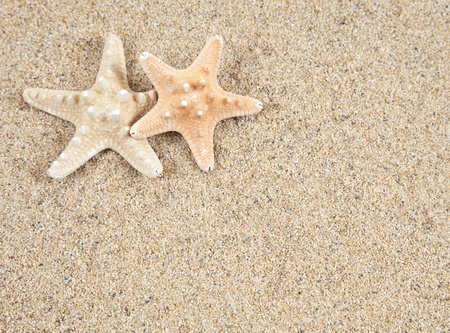 starfish in the beach sand - copy space photo
