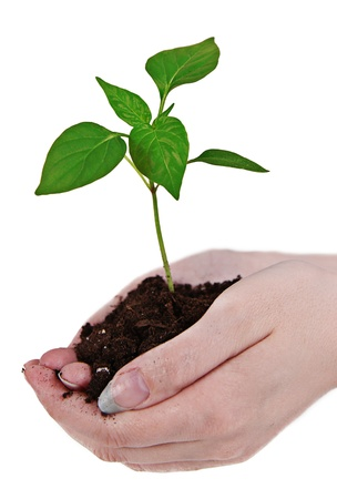 earth handful: Small little plant in womans hand Stock Photo