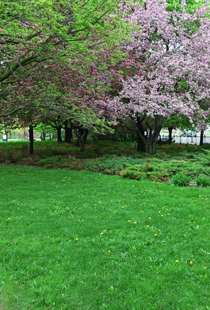 Beauitful spring trees and grass in park photo