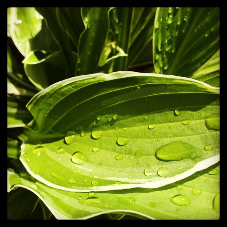 water streaming down leaf Stock Photo