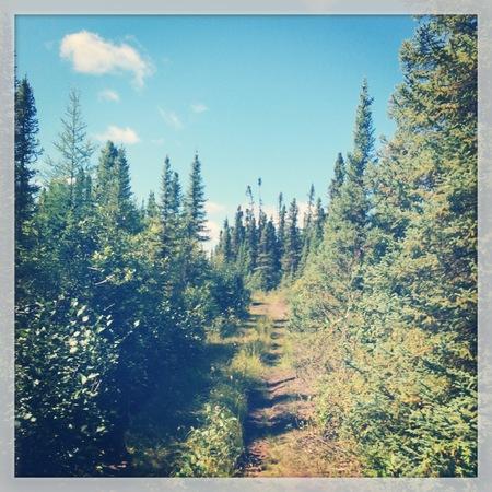 Waldpfad mit Vintage-Effekt Standard-Bild - 33354960