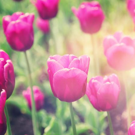 Blumenstrauß mit Vintage-Effekt Standard-Bild - 33356644