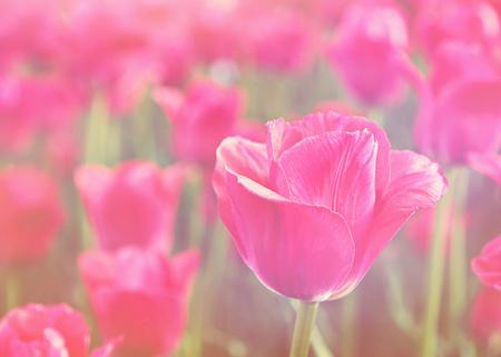 Feld der Blumen mit Vintage-Effekt Standard-Bild - 33356647