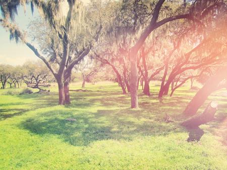 Feld mit Bäumen mit Vintage-Effekt Standard-Bild - 33355293