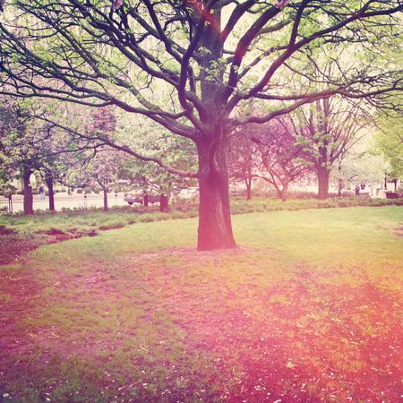 Baum in der Mitte eines Feldes mit Vintage-Effekt Standard-Bild - 33354002