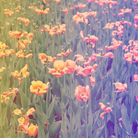 Feld der Blumen mit Vintage-Effekt Standard-Bild - 33354013