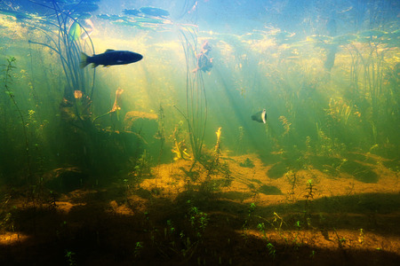 Beautiful Underwater view of a pond in summer with fish
