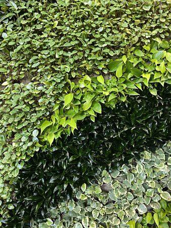 Beautiful living wall with plants taking close up