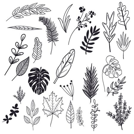 Black silhouette and line summer and tropical leaves icons set on white background Stock Photo