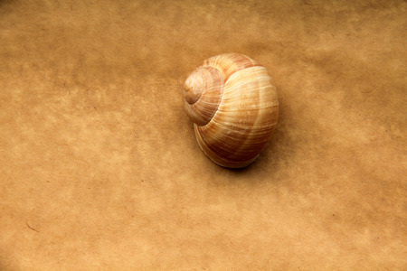 sea slug: Shell of grape snail on old paper