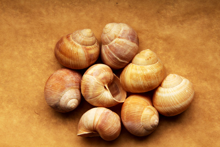 grape snail: Shells of grape snails on old paper Stock Photo