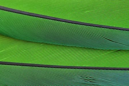 オウムの羽のマクロ写真をクローズ アップ美しい背景 写真素材