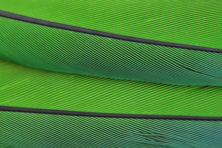 Close up macro photo of parrots feather beautiful background Фото со стока
