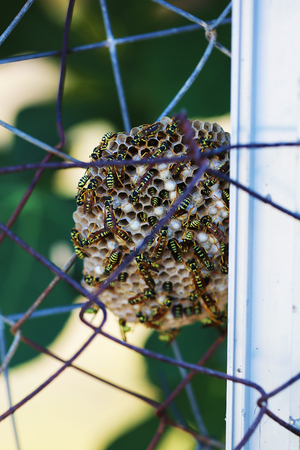 Wild wasps make a hive nest on a metal fence close up macro photo Stock Photo