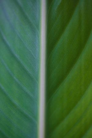 Strelitzia or Bird of paradise tropical flower closeup macro photo