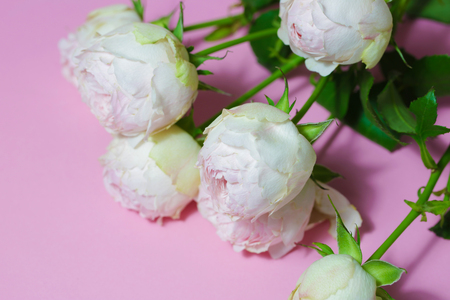 Beautiful pink roses close up macro flowers photo Stock Photo - 119157903