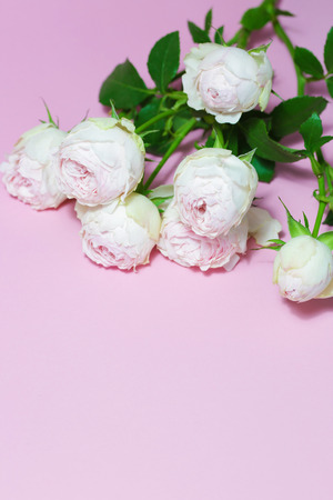 Beautiful pink roses close up macro flowers photo Stock Photo - 119157907