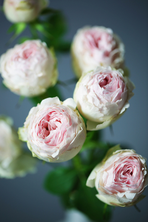 Beautiful pink roses close up macro flowers photo Stock Photo - 119157910