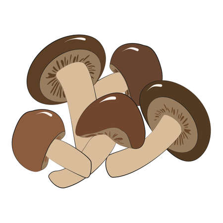 Enoki or shiitake mushrooms are edible Japanese mushrooms-an ingredient for ramen noodle soup. Vector illustration in hand-drawn style on a white background.