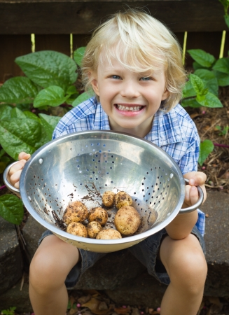 A happy young boy holding organic  potatoes from his garden photo