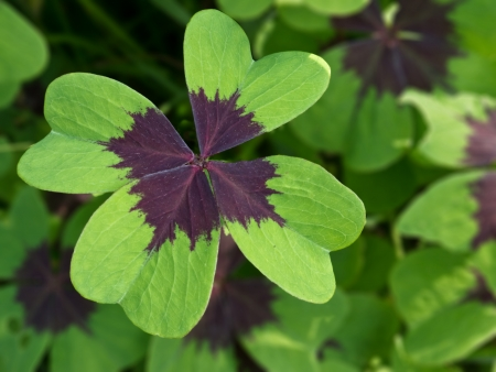 background with four leaf clover photo