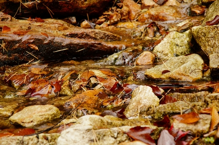pine creek: Autumn creek in the forest with brown leaves and pine needles lying in the water.