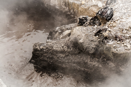 bubbling: Bubbling mud in New Zealand Stock Photo
