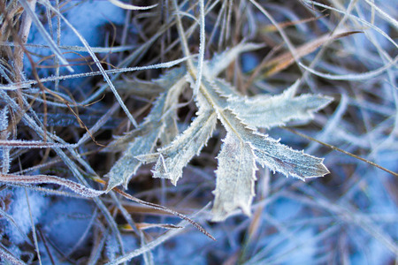 non urban: Plants covered with winter rime
