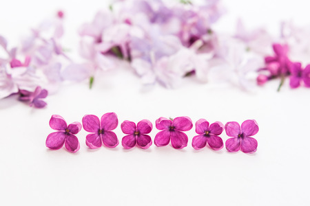 separate blossoming purple spring lilac flowers lie a row on white background. Flat lay. Concept of freshness and beautifulness. DOF on lilac flower.
