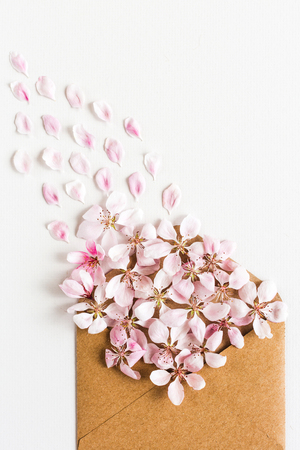 close up of opened craft paper envelope full of spring blossom sacura flowers on white background. top view. concept of love. Flat lay. happy valentines day. womens day. 8 of march. mothers day.