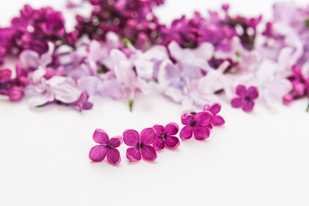 blossoming purple spring lilac flowers on white background. Flat lay. Concept of freshness and beautifulness. DOF on lilac flower. minimalistic hi key picture of blossoming plant.