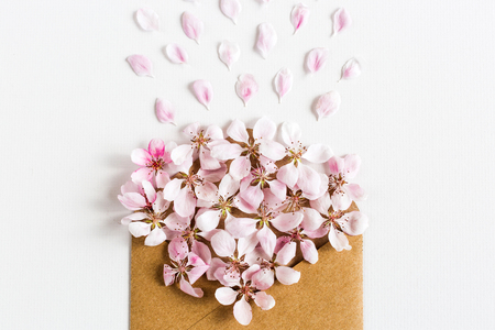 flirtation: opened craft paper envelope full of spring blossom sacura flowers on white background. top view. concept of love. Flat lay.