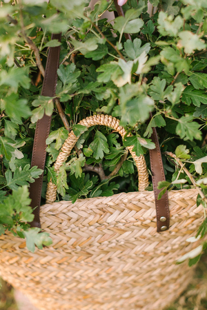 nature, countrylife, ecology, environment, spring, weekends concept - summer straw handbag with leather straps full of fresh green oak branches Stock Photo