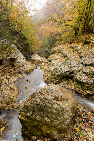 environment, freedom, travelling concept. wonderful view, between stones and rocky coasts under the crowns of yellow and green trees there is small stream of clean