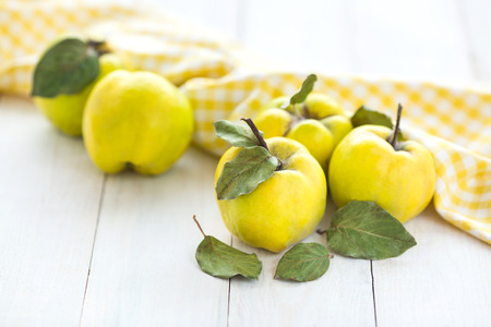 healthy lifestyle, nutrition, autumn concept. on white desk there are extremely bright yellow fruits called quince, that are very healthy, contains a lot of vitamins