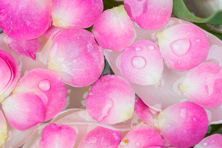 botany, environment, beauty concept. close up of different leaves and petals that are swimming in clean water, rose petals of pink colour are on the surface of it and white ones of tulips under it
